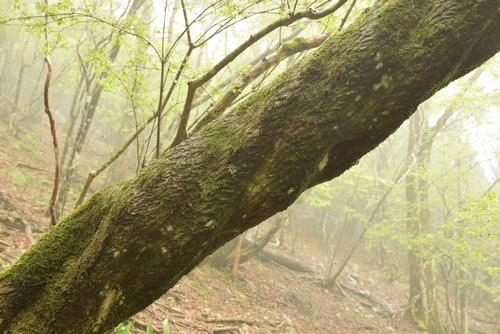 270509 時雨岳登山25