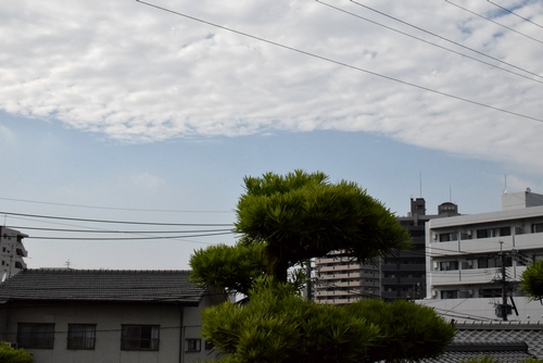270603 梅雨の晴れ間3