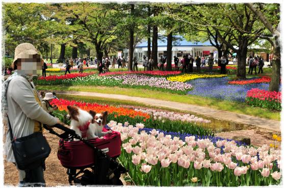 昭和記念公園④