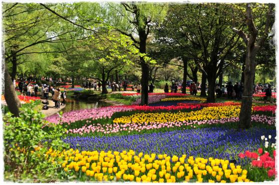 昭和記念公園⑯