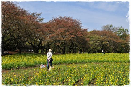 昭和記念公園⑱