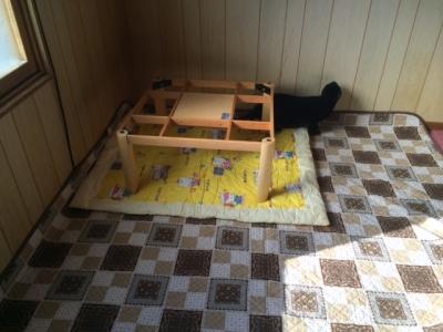 猫部屋タイルカーペット5