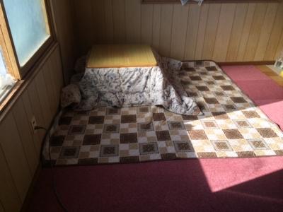 猫部屋タイルカーペット6