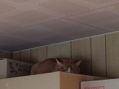 猫部屋のカーペット敷き13