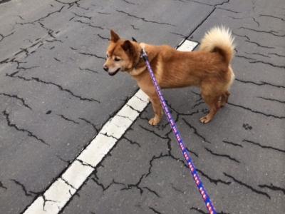らっきぃお散歩