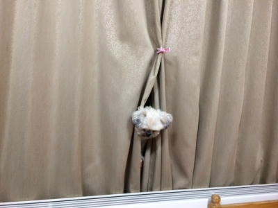 ちったカーテン