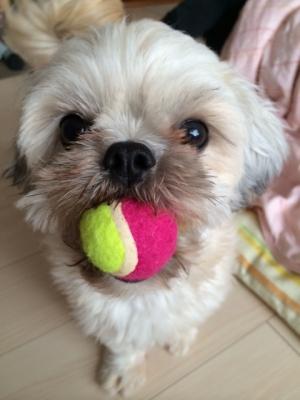 ちった新しいボール