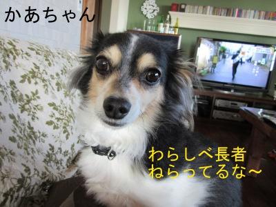 IMG_5260a.jpg