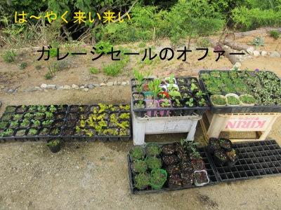 IMG_6231a.jpg