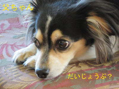 IMG_6275a.jpg