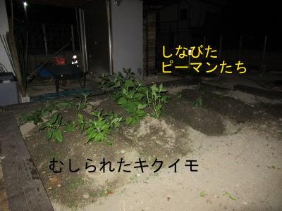 IMG_6307a.jpg