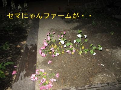 IMG_6312a.jpg