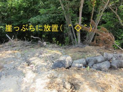 IMG_6375a.jpg