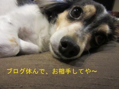 IMG_7080a.jpg