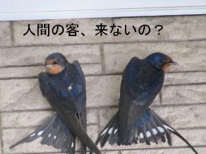 IMG_7252a.jpg
