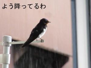 IMG_7277z.jpg