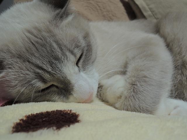SleepingShougatasuThisYearAlso3