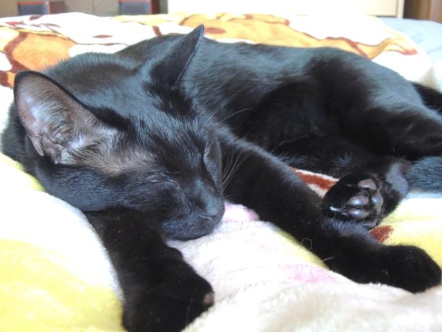 SleepingShougatasuThisYearAlso6