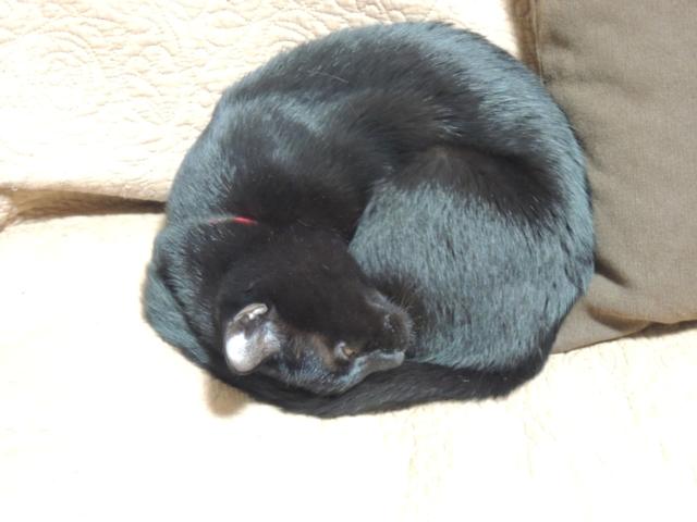 SleepingShougatasuThisYearAlso4