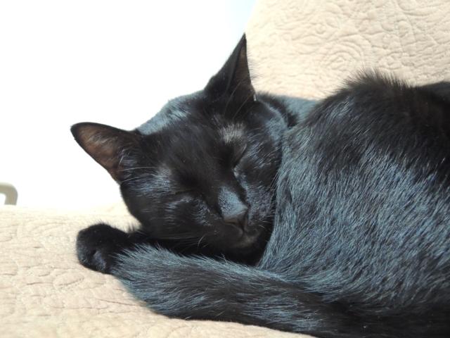 SleepingShougatasuThisYearAlso2