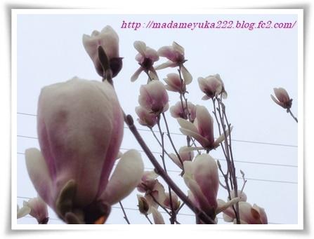 IMG_3748.jpg