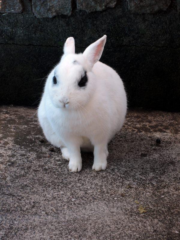 あ、しばらく忘れてた ウサギが出てきた。