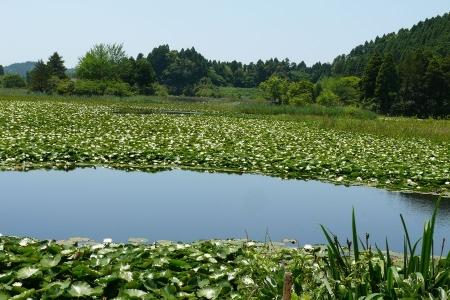 睡蓮の咲く沼