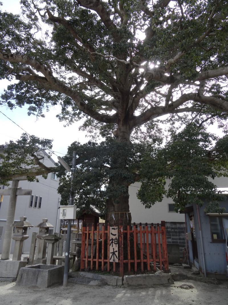 櫟谷七野神社2