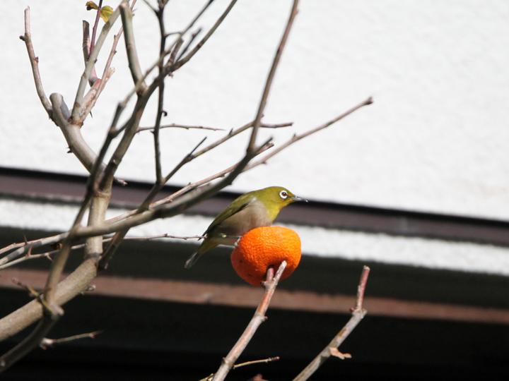 bird_2015.jpg