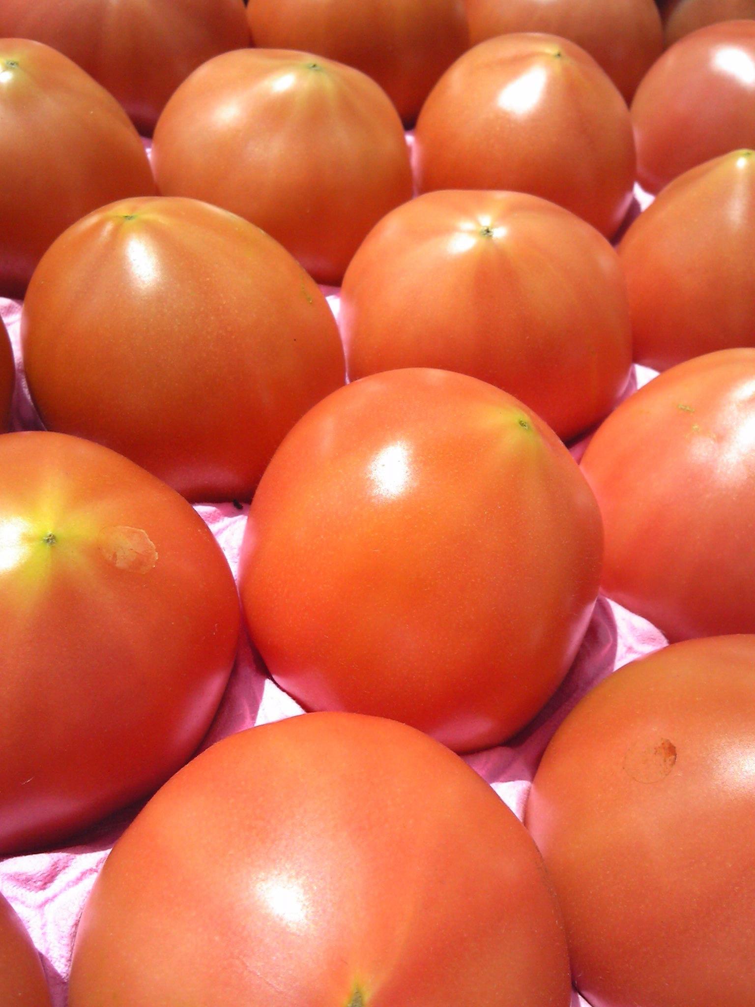 411トマト