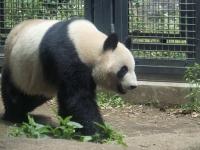 BL150518上野動物園1P5180002