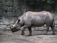 BL150518上野動物園3P5180040