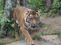 BL150518上野動物園4P5180018