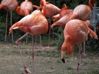 BL150518上野動物園5P5180033