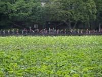 BL150518上野動物園8P5180056