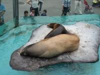 BL150518上野動物園6P5180030