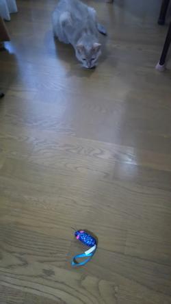 玩具とレオ2015.02.24