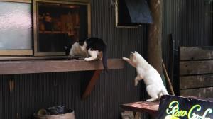 桜新町オープンカフェニャンズ2015.5.06