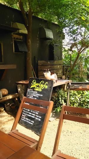 桜新町オープンカフェ①2015.5.06