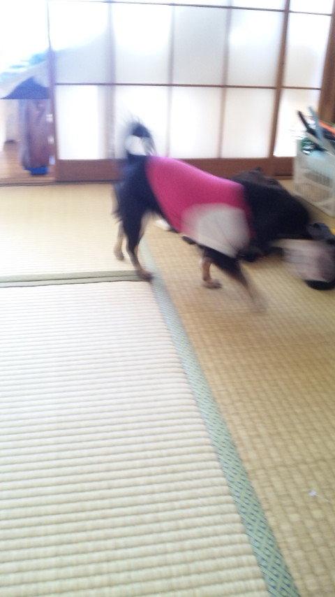 絵描き/チャリダー/職業酔いどれのblog-DVC00140.jpg