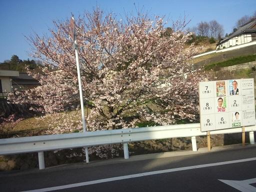 20150330 桜 ブログ