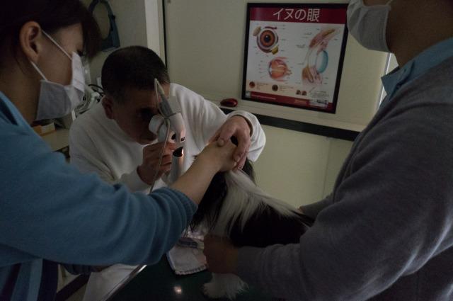 今度は目の病気で病院へ-011
