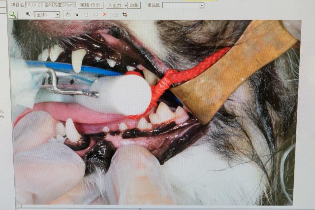 歯石・腫瘍除去結果&3月に手術決定-003