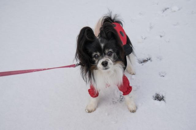 雪の日のお散歩♪-001
