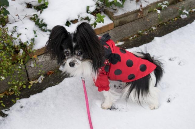 雪の日のお散歩♪-002