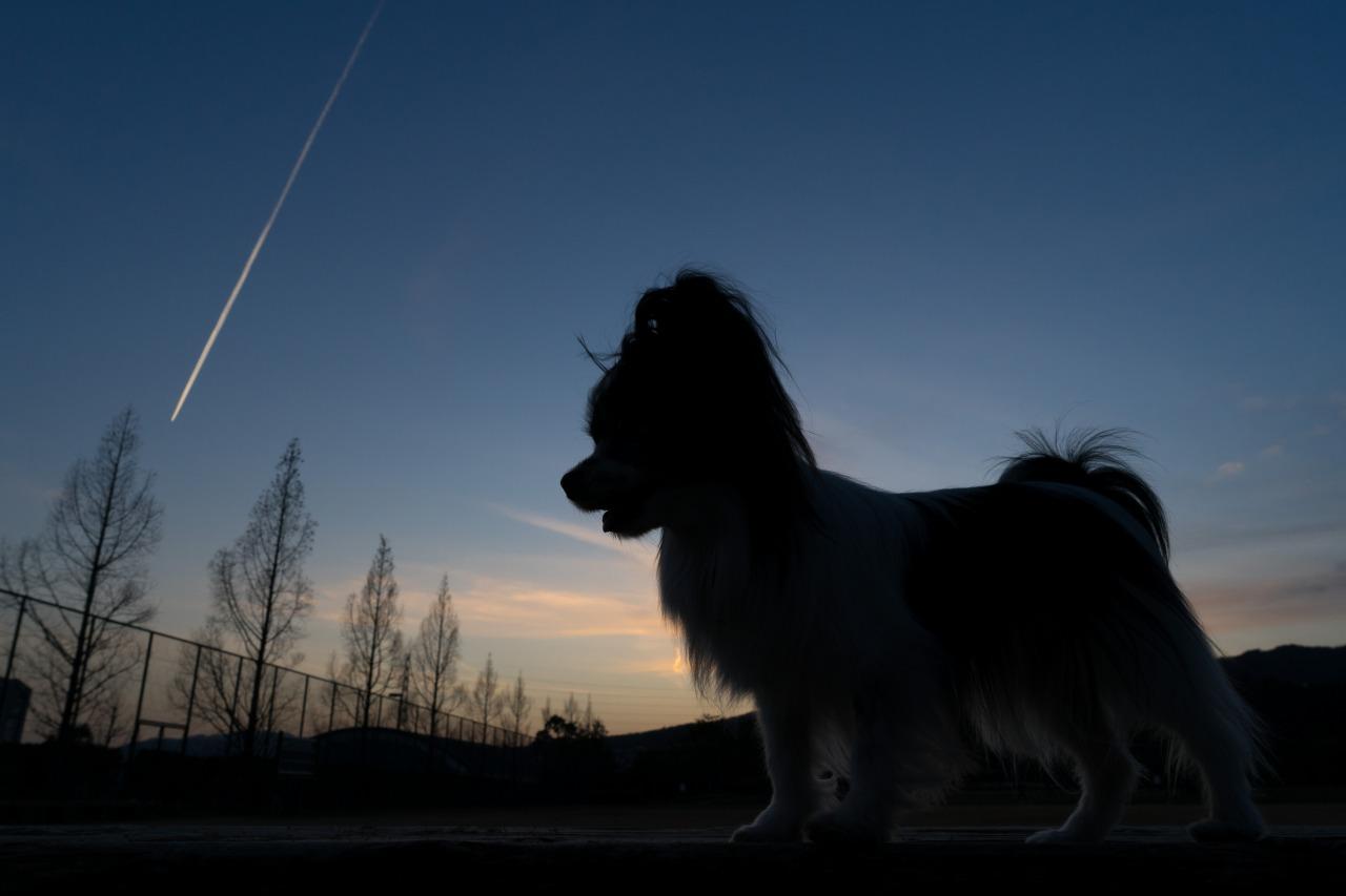 「マリィと飛行機雲」 ~シルエット写真♪~-1