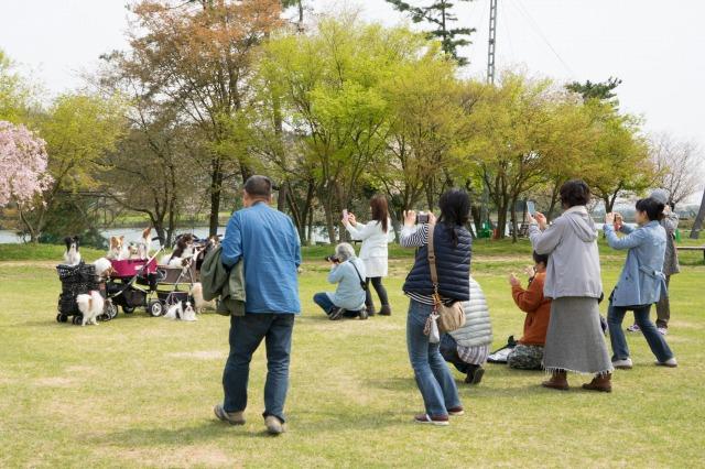 「兵庫県立フラワーセンターで会いましょう」企画【しだれ桜とコラボ♪】-003