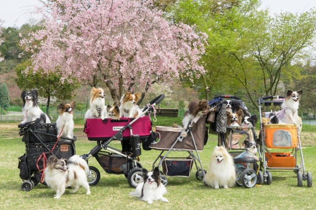 「兵庫県立フラワーセンターで会いましょう」企画【しだれ桜とコラボ♪】-002