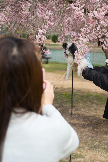 「兵庫県立フラワーセンターで会いましょう」企画【しだれ桜とコラボ♪】-006