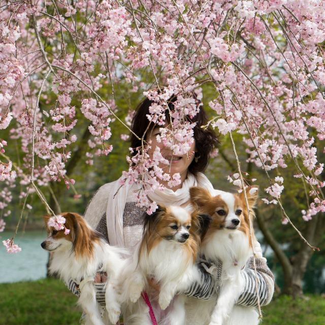 「兵庫県立フラワーセンターで会いましょう」企画【しだれ桜とコラボ♪】-009
